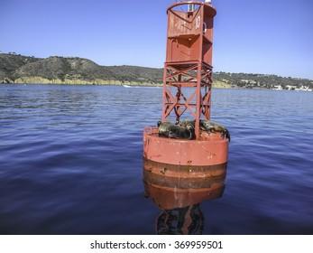 Seals on a buoy near San Diego, California