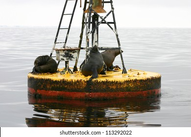 Seals on a Buoy, Walvis Bay, Namibia