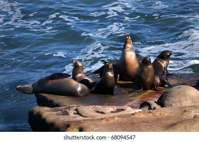 Seals on the rocks at La Jolla Cove at San Diego La Jolla Underwater Park Ecological Reserve in California