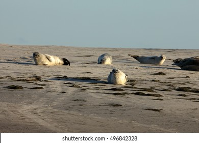 Seals on the sandbank