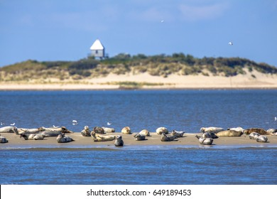 Seals on a sandbank near uninhabited Rottumerplaat island in the Wadden sea
