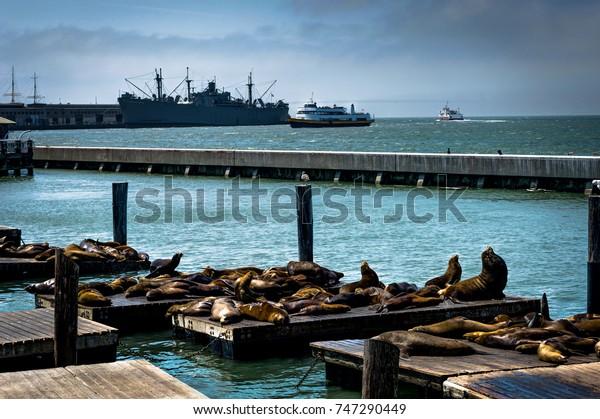 Seals Pier 39 Fishermans Wharf San Stock Photo Edit Now 747290449