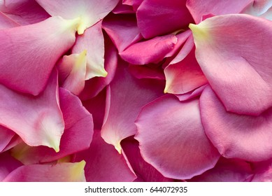 Seamless Background with Pink Petals of Roses and beautiful Texture