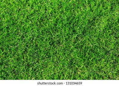 Seamless bright green grass background