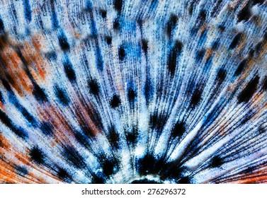Seamless Butterfly wing pattern