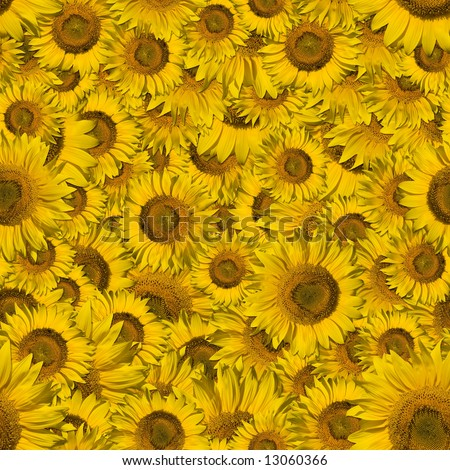 Seamless color Sunflower wallpaper background