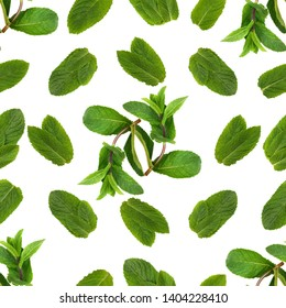 Seamless floral pattern of twigs and leaves of fragrant green peppermint on a white background