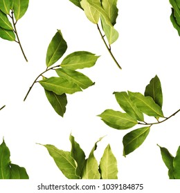 A seamless pattern with aromatic bay tree branches on white background. The nature pattern for eco cookery business