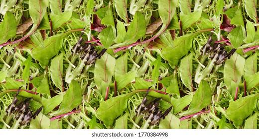Seamless pattern background. Leaf mix lettuce. Vegetable still life. Healthy eating.
