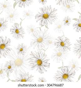 Seamless pattern of chamomile
