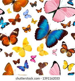seamless pattern of colored butterflies. tropical insects