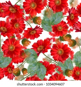 seamless   pattern of gerbera flowers . Endless texture for your design.