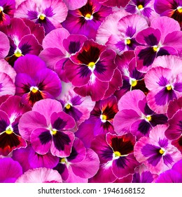 Seamless pattern of pansy flowers. Bright colorful summer background. Chaotic arrangement of buds.