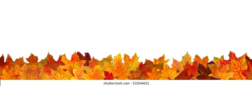 Seamless pattern of red maple autumn leaves, lying on the ground.