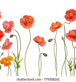 seamless pattern with Red Poppy Flowers on white background