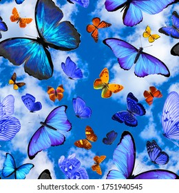 seamless pattern with tropical butterflies on a background of blue sky with clouds
