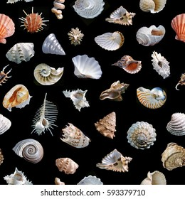 Seamless shells on black background.