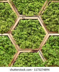 Seamless texture of floral moss modules in hexagon wooden frames. Wroclaw. Poland.