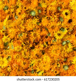 seamless texture from flowers of calendula
