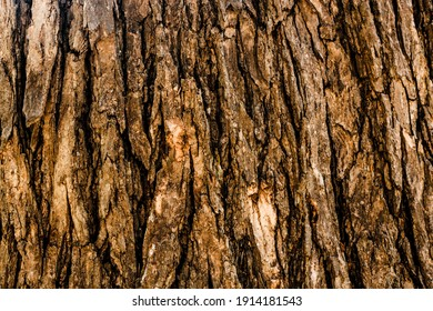 A seamless texture of tree bark - cool for wallpaper or background