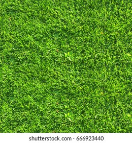 seamless texture of trimmed lawn