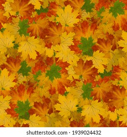 Seamless texture of yellow and red fallen autumn leaves. seamless pattern for your background
