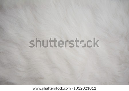 Seamless White Fur Carpet Texture as Design Template or Background with  Empty Space for Text. 6c671bc42