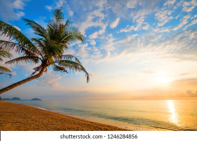 Seascape of beautiful tropical beach with palm tree at sunrise. sea view beach in summer background.