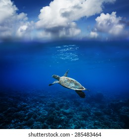 Seascape with clouds Postcard. Sea Turtle Floating over coral reef. Marine Animals in Beautiful Underwater World Discovered