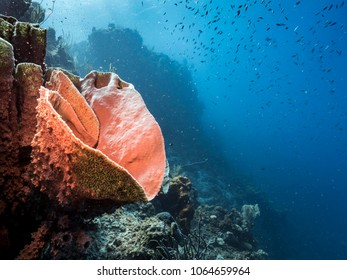 Seascape of coral reef in the Caribbean Sea around Curacao/Netherlands Antilles with soft and hard coral