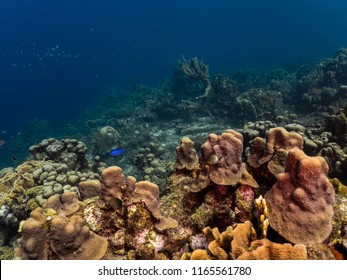 Seascape of coral reef / Caribbean Sea / Curacao with Neptune / Poseidon statue, various hard and soft corals, sponges and sea fan
