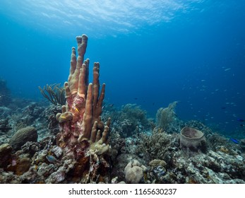 Seascape of coral reef / Caribbean Sea / Curacao with pillar coral, various hard and soft corals, sponges and blue background