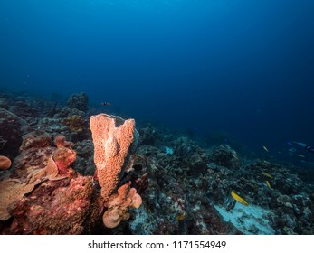Seascape of coral reef / Caribbean Sea / Curacao with various hard and soft corals, pink sponge and blue background