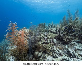 Seascape of coral reef in Caribbean Sea around Curacao at dive site Smokey's  with various coral and sponge