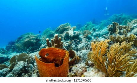 Seascape of coral reef in Caribbean Sea around Curacao at dive site Duane's Release  with various coral and big sponge