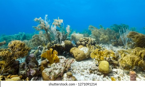 Seascape of coral reef in Caribbean Sea around Curacao at dive site Duane's Release  with various coral and sponge