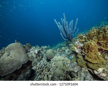 Seascape of coral reef in Caribbean Sea around Curacao at dive site Black Coral Garden  with various coral and sponge