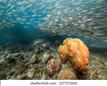 Seascape of coral reef in Caribbean Sea around Curacao at dive site Playa Grandi  with baitball, various coral and sponge