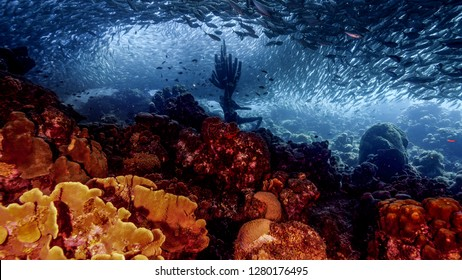 Seascape of coral reef in Caribbean Sea around Curacao at dive site Playa Grandi  with neptune statue, baitball, various coral and sponge