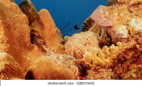 Seascape of coral reef in Caribbean Sea around Curacao at dive site Playa Grandi  with scorpion fish, various coral and sponge