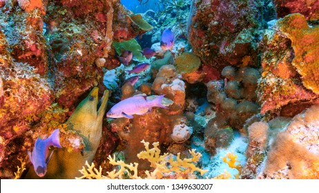 Seascape of coral reef in the Caribbean Sea around Curacao at dive site Smokey's with moray eel