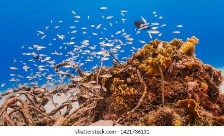 Seascape of coral reef in the Caribbean Sea around Curacao with various corals and fishes
