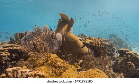 Seascape of coral reef in the Caribbean Sea around Curacao with gorgonian coral and sponge