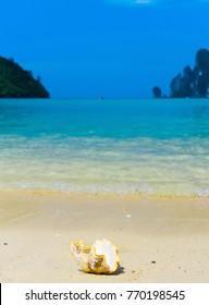 Seascape Divine Paradise Blue