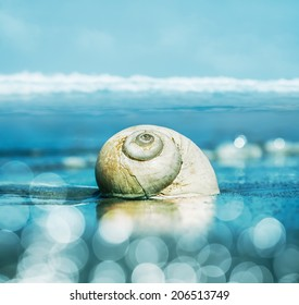 A seascape featuring a moon snail shell with shallow depth of field.  Image is toned cyan and blue with bokeh light effects.