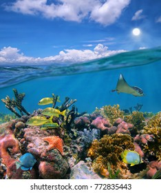 Seascape over and under sea surface, cloudy blue sky and colorful coral reef with tropical marine life underwater, Caribbean sea