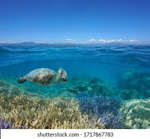 Seascape over and under water surface, coral reef with a green sea turtle underwater and the coast of Grande-Terre island at the horizon, south Pacific ocean, New Caledonia, Oceania