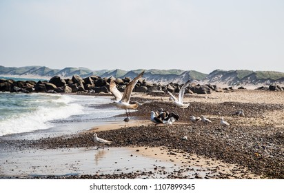 Seascape with seagulls flying at danish beach name Vorupor village , Seagulls flying o the beach