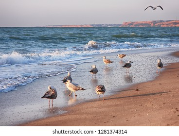 Seascape with seagulls flying at danish beach. Seagulls flying o the beach