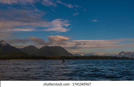 seascape shoots during a whales watching cruise, Tofino, British Columbia, Canada